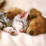 Parquet e animali domestici: consigli per una convivenza felice