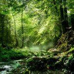 Libri per gli amanti degli alberi: 10 titoli +1